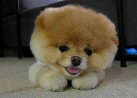 cachorro1